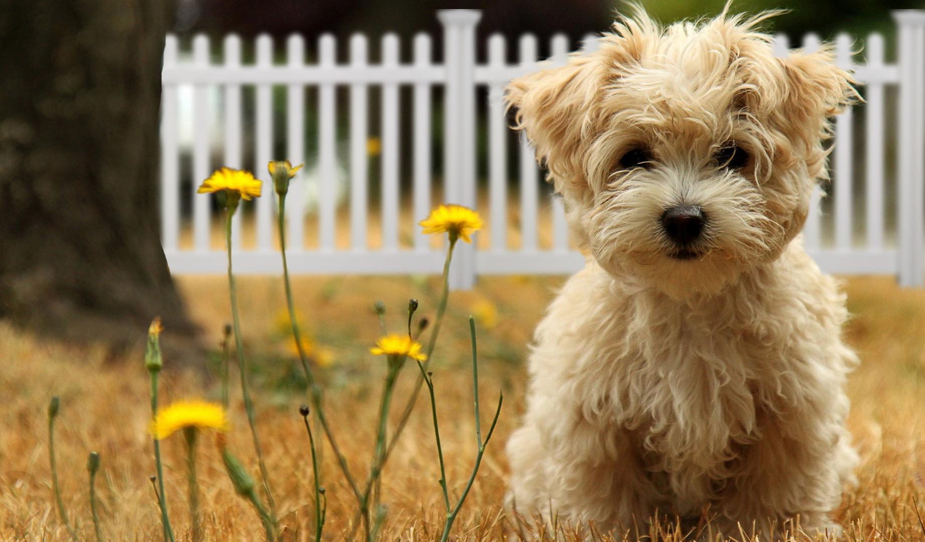 Backyard Fence for Dogs | WamBam Fence