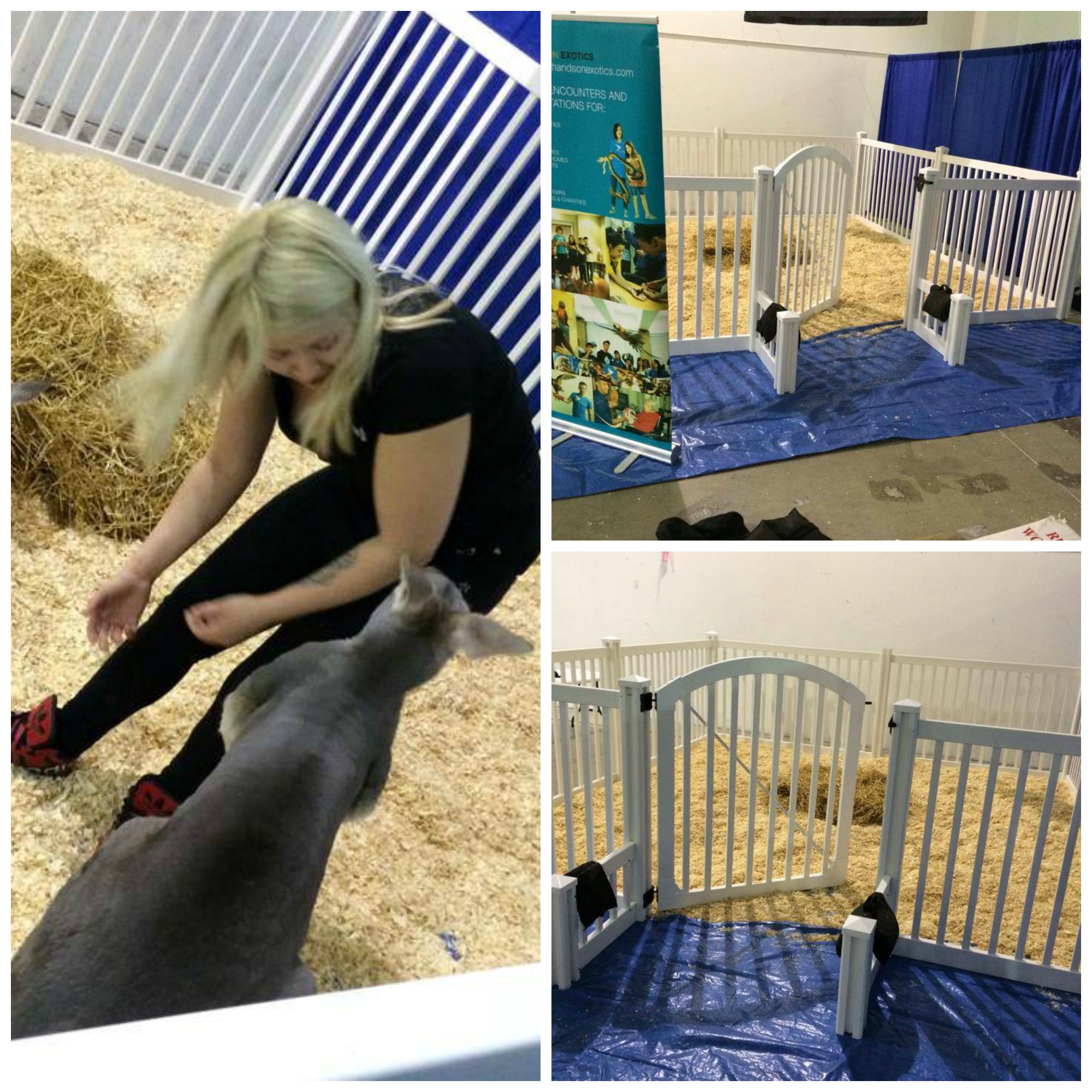 This petting zoo in Toronto used the Plain Jane Vinyl Fence to contain their pet kangaroos.
