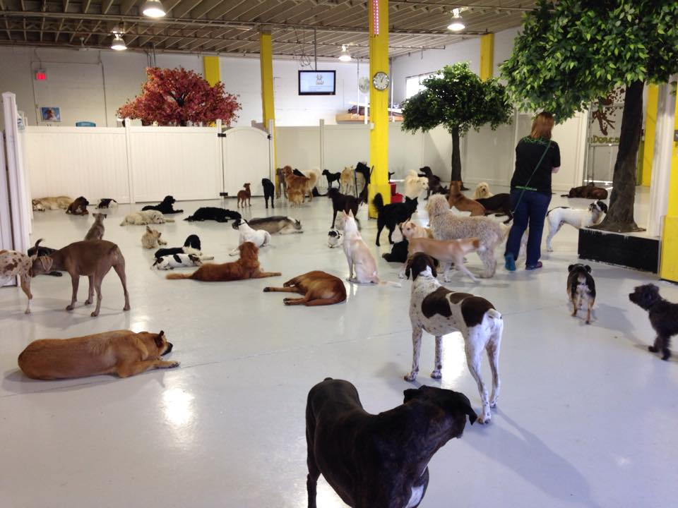 Canine Adventure Den Daycare in Vancouver BC Canada used the Steady Freddy Vinyl Privacy for their dog daycare fencing!